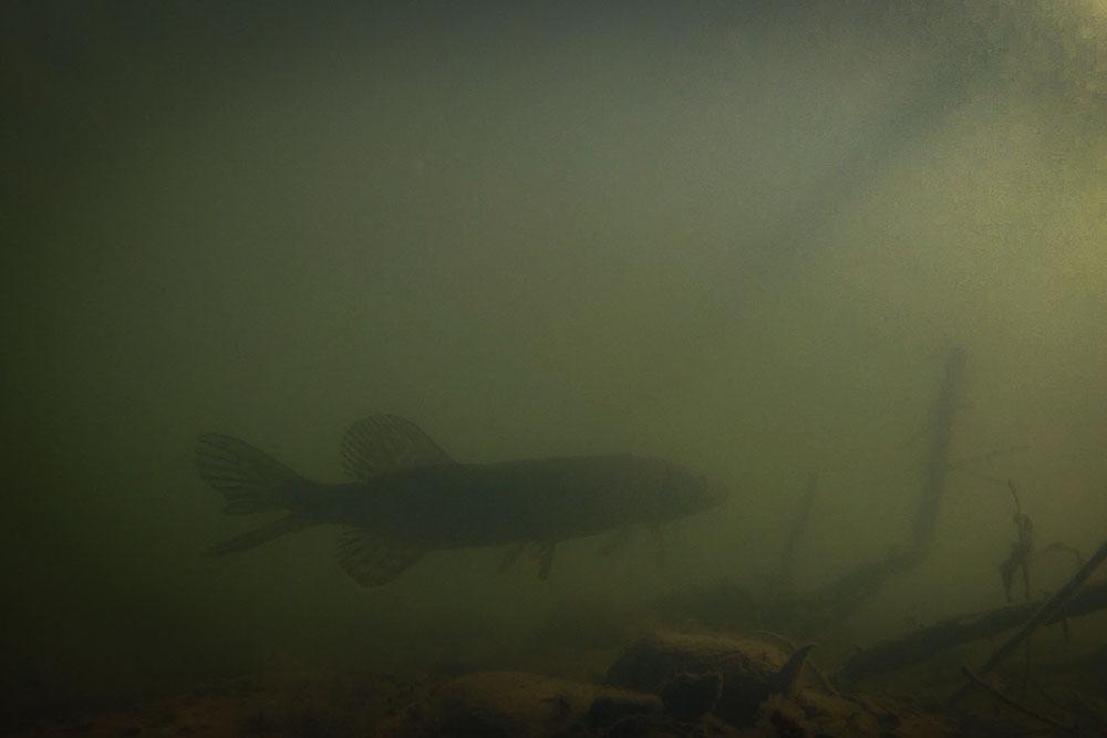 Video Aziendale Extra Fishing luccio